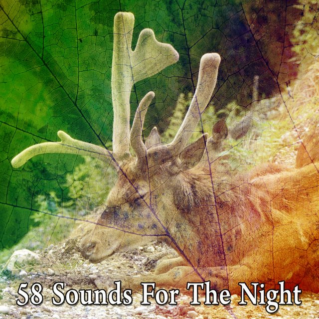 58 Sounds for the Night