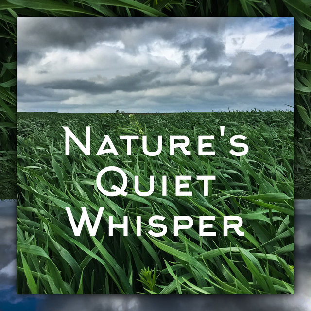 Nature's Quiet Whisper – Perfectly Relaxing Mother Nature Sounds for Sleep and Rest