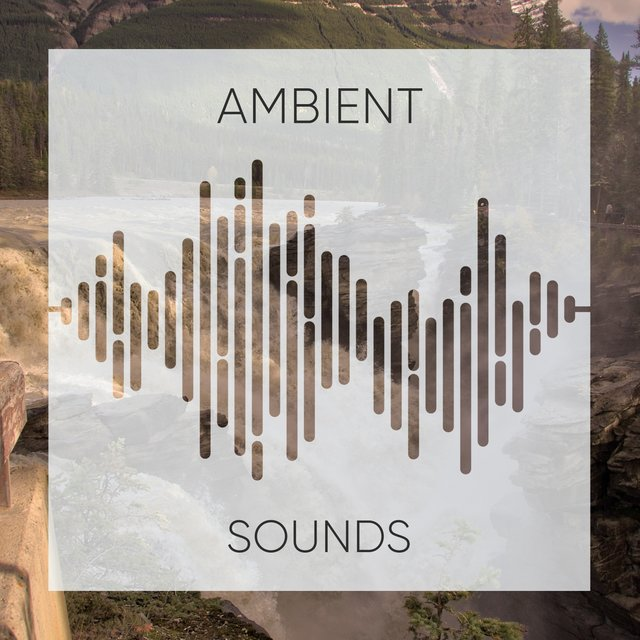 # 1 Album: Ambient Sounds
