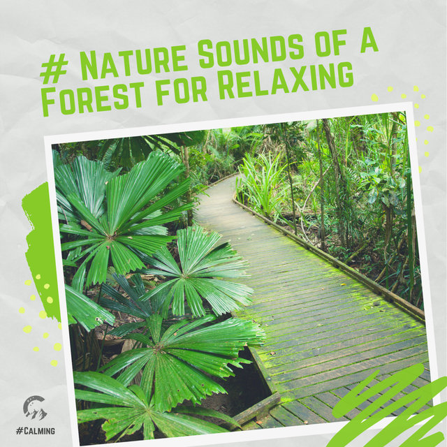 # Nature Sounds of a Forest for Relaxing