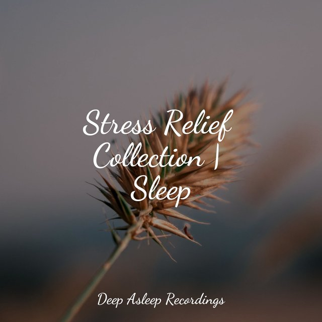 Stress Relief Collection | Sleep