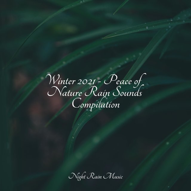 Winter 2021 - Peace of Nature Rain Sounds Compilation