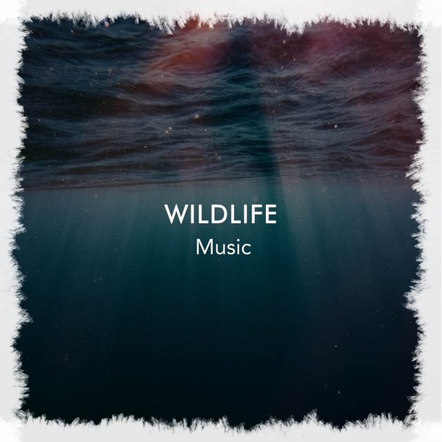 Peaceful Ambient Wildlife Music