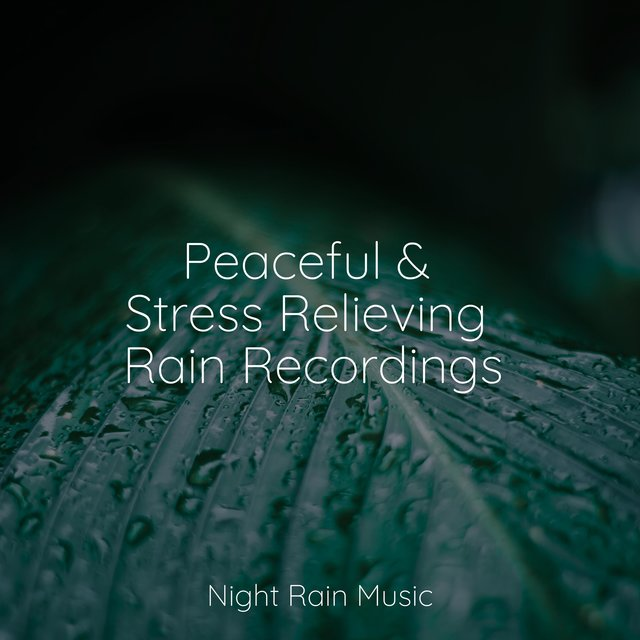 Peaceful & Stress Relieving Rain Recordings