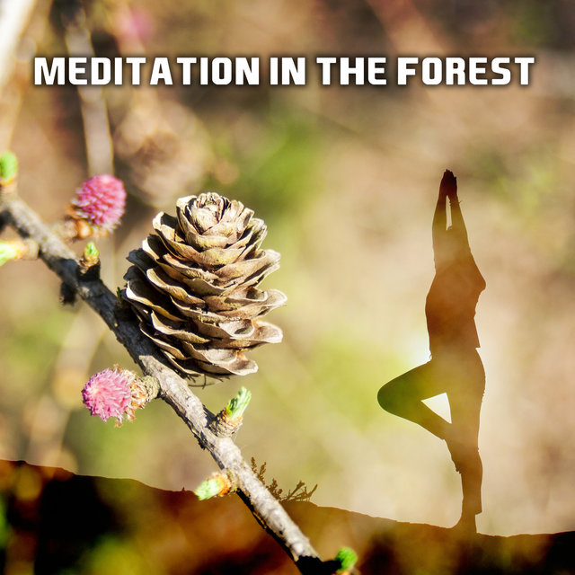 Meditation in the Forest – Relaxing Music, Be Close The Nature, Feel Inner Calmness, Zen, Bliss