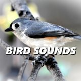 Irresistible Bird Sounds