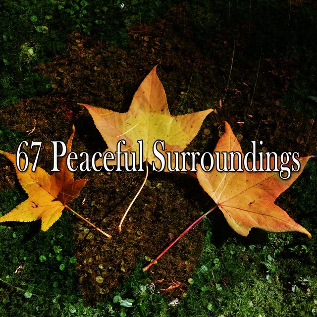 67 Peaceful Surroundings