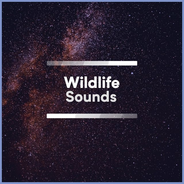 Quiet Tranquil Wildlife Sounds