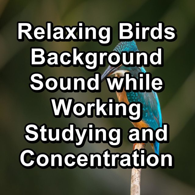 Relaxing Birds Background Sound while Working Studying and Concentration