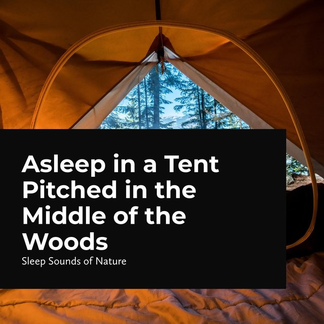 Asleep in a Tent Pitched in the Middle of the Woods
