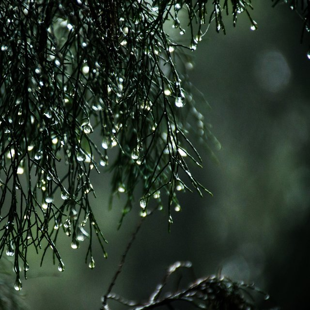 Peaceful Recordings: Serene Rainy Morning