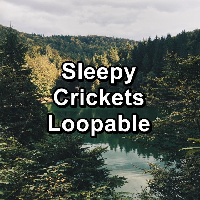 Sleepy Crickets Loopable