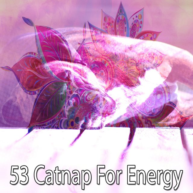 53 Catnap for Energy