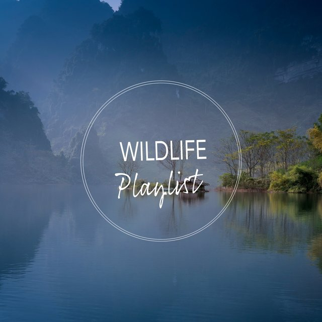 Peaceful Garden Wildlife Playlist