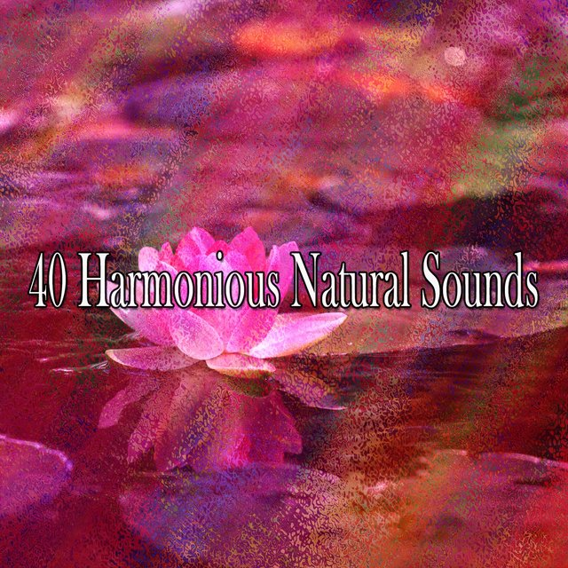 40 Harmonious Natural Sounds