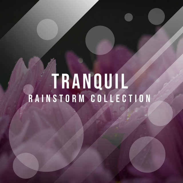 #15 Tranquil Rainstorm Collection