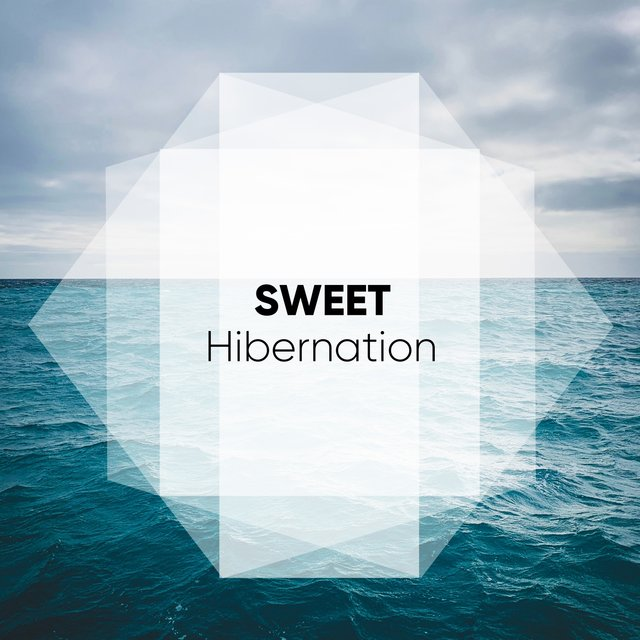# 1 Album: Sweet Hibernation