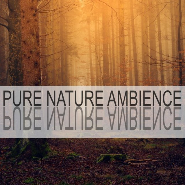 Pure Nature Ambience
