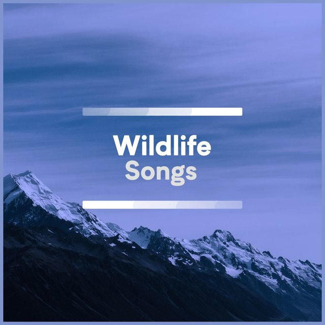 Soft Tranquil Wildlife Songs