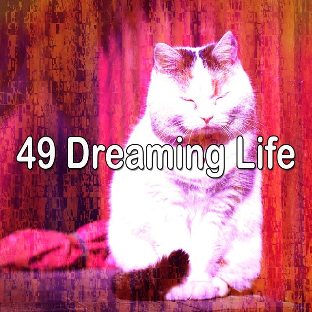 49 Dreaming Life