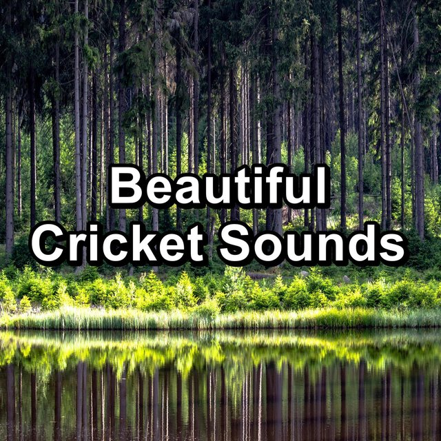 Beautiful Cricket Sounds