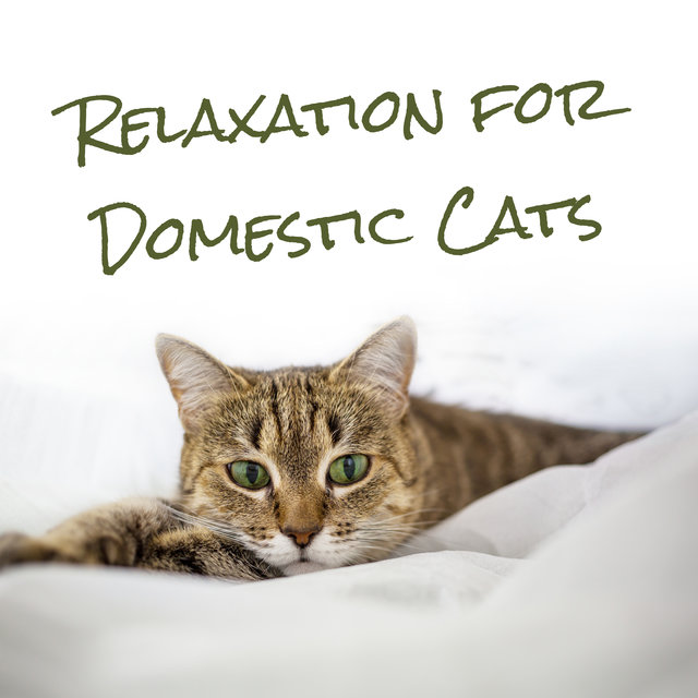 Relaxation for Domestic Cats - Mesmerizing Sounds of Nature That Will Keep Your Pet Calm and Happy, Animal Companion, Good Behaviour, Best Friend, Nature Collection