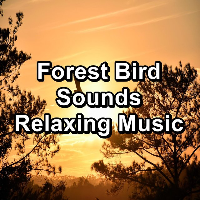 Forest Bird Sounds Relaxing Music