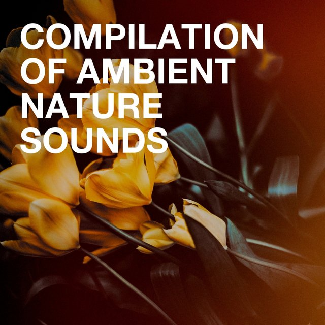 Compilation of Ambient Nature Sounds
