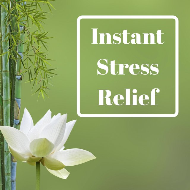 Instant Stress Relief - Restful Oasis of Zen Garden, Magical Music for Positive Attitude