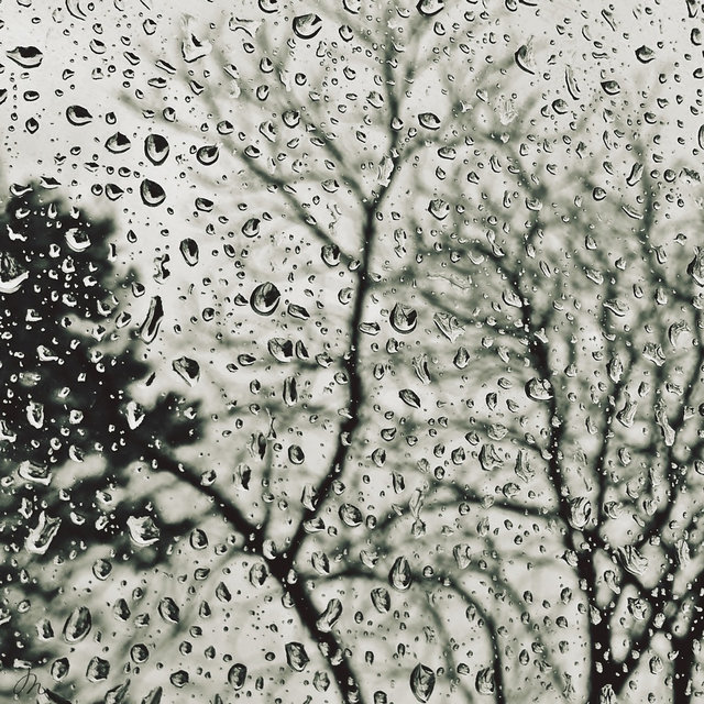 Peaceful Recordings: Spring Rainshower