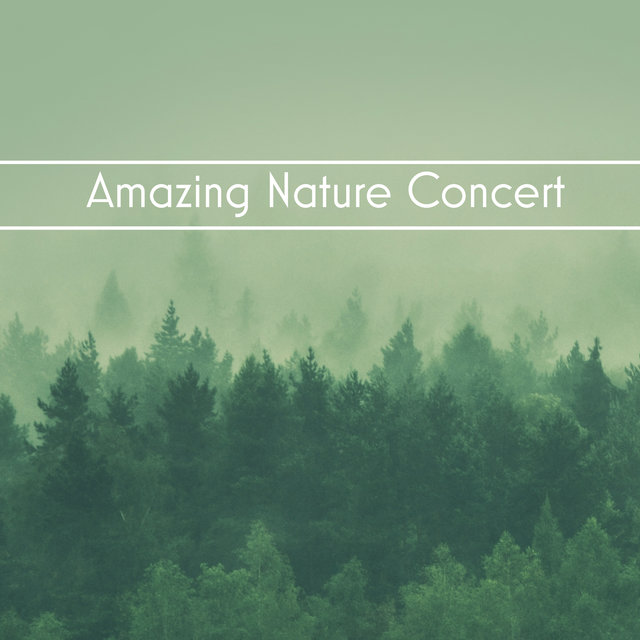 Amazing Nature Concert - 1 Hour of Natural New Age Melodies for Relaxation, Sleep, Study, Meditation and Yoga