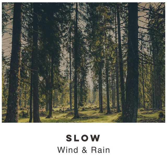 # 1 Album: Slow Wind & Rain