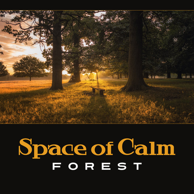 Space of Calm: Forest – Deep Relaxation, Contemplation Eternity, Letting Go of Tension and Stress, Equanimity