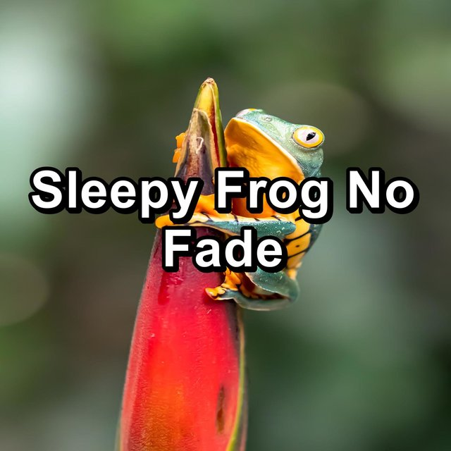 Sleepy Frog No Fade