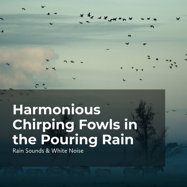 Harmonious Chirping Fowls in the Pouring Rain