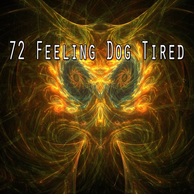 72 Feeling Dog Tired