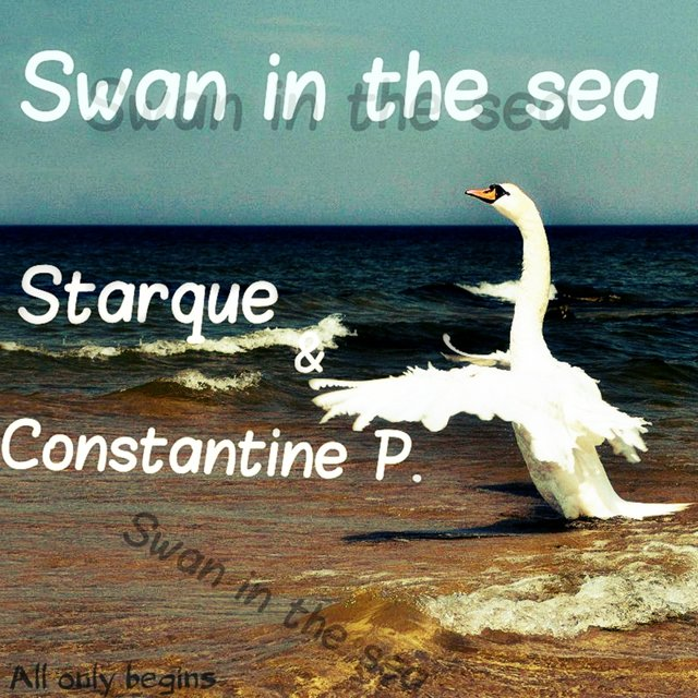 Swan In The Sea