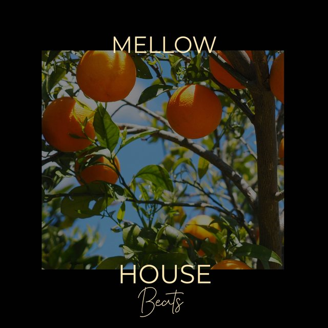 Mellow House Beats