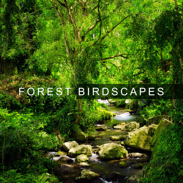 Forest Birdscapes