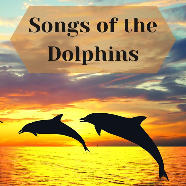 Songs of the Dolphins - Sounds from the Oceans for Sleep and Relaxation