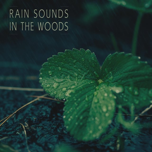 Rain Sounds in the Woods
