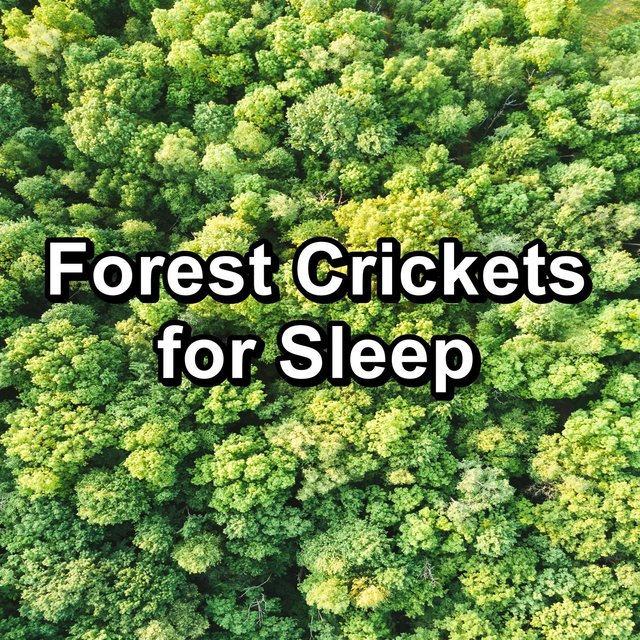 Forest Crickets for Sleep
