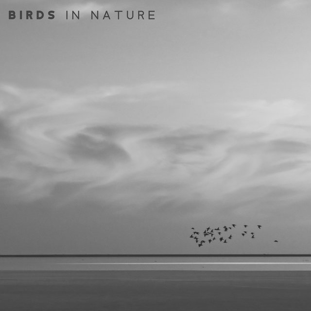 Birds in Nature: Sounds of Wild-life with a Gentle Background of Piano Music creating a Unique Relaxing Ambience