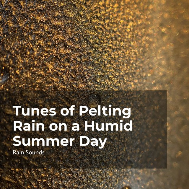 Tunes of Pelting Rain on a Humid Summer Day