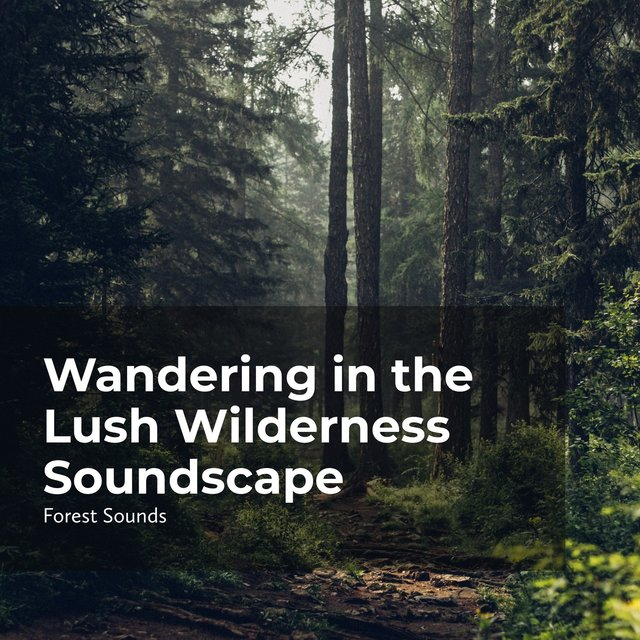 Wandering in the Lush Wilderness Soundscape