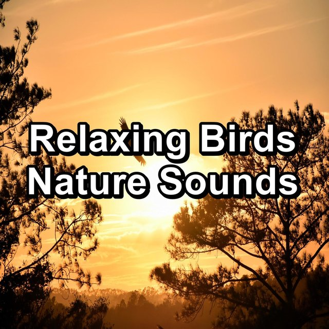 Relaxing Birds  Nature Sounds