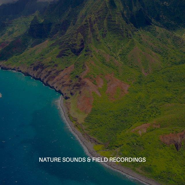 Nature Sounds & Field Recordings