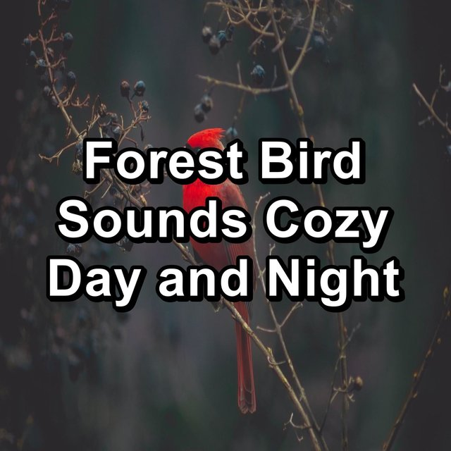 Forest Bird Sounds Cozy Day and Night