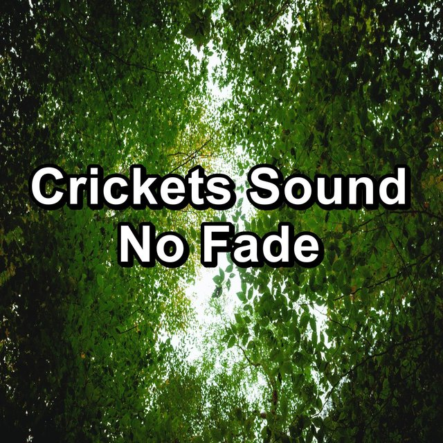 Crickets Sound No Fade