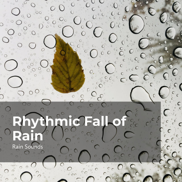 Rhythmic Fall of Rain
